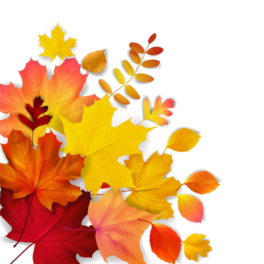 Isolated yellow, orange, red autumn leaves, vector illustration